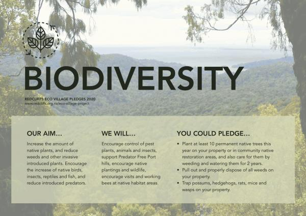 Redcliffs Te Rae Kura display biodiversity2